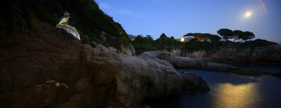 La grotte marine de Coggia abrite une importante colonie de chauves-souris, ici des Minioptères, Y. Le Bris
