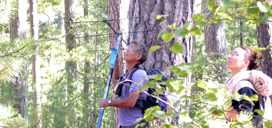 Le suivi télémétrique apporte des informations sur l'écologie des espèces, comme la recherche des gîtes arboricoles