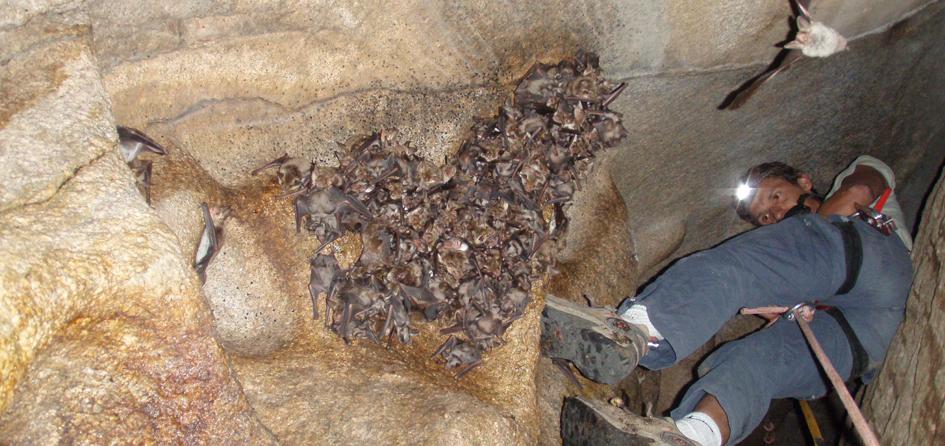 Une des nombreuses colonies de chauves-souris suivies, ici une grotte perchée dans la Lonca